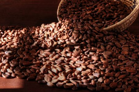window light: Pile of raw cacao beans on wooden table with natural window light