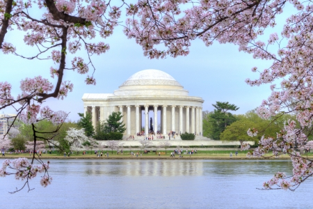 Thomas Jefferson memorial framed with beautiful cherry blossoms and Potomac River tidal basin