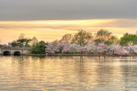 Beautiful orange sunset over Potomac river basin with tourists viewing cherry blossoms in full bloom in Washington D.C. photo
