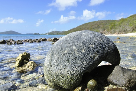 brain coral: Large piece of brain coral on rocky island beach in the Caribbean Sea Stock Photo