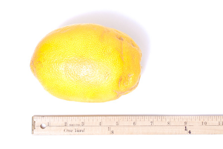 inches: Huge yellow lemon next to ruler on white measures over six inches in length Stock Photo