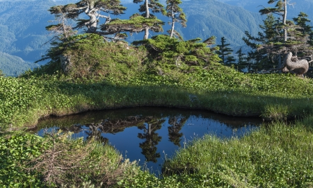 Reflections of pines in water of small pool on top of Mount Verstovia near Sitka, Alaska Stock Photo - 23412705