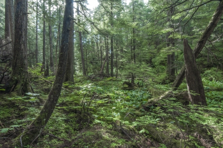 Diverse vegetation in pine forest near Sitka on Baranof Island in southeast Alaska Stock Photo - 23415183