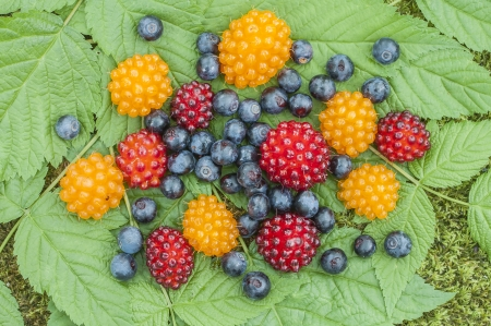 anti oxidants: Assortment of wild blueberries and salmon berries on leaves on forest floor