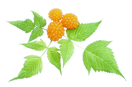 anti oxidants: Closeup of fresh Rubus spectabilis orange salmonberry and green leaves isolated on white
