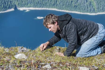 Caucasian man crawls on top of mountain as he forages for wild berries in the ground cover vegetation on Bear Mountain on Baranof Island, Alaska with Blue Lake in background Stock Photo - 23482756