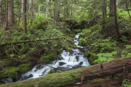 Beautiful waterfall rushes downstream along the Herring Cove Trail in a dense forest near Sitka, Alaska photo
