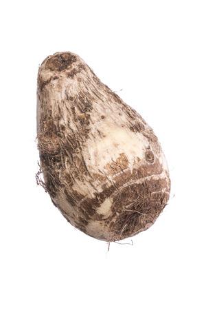 白い背景に分離されたサトイモ esculenta 太郎ルート 写真素材