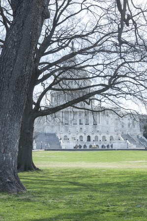 u s a: U S  capitol building in Washington D C  with bare trees and green Spring lawn in foreground