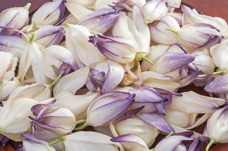 chaparral: Closeup of pile of fresh picked chaparral yucca Hesperoyucca whipplei flowers Stock Photo