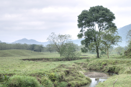 HDR image of creek running through fertile pasture land populated with trees in Chiapas, Mexico