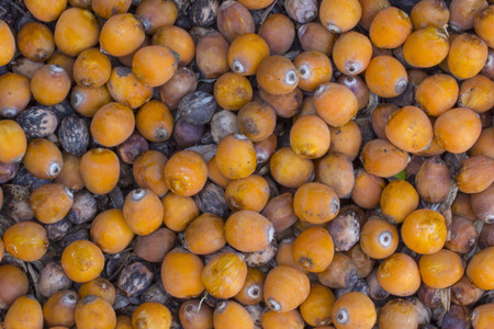 Scattered edible ripe fruits of Syagrus romanzoffiana queen palm lying on ground