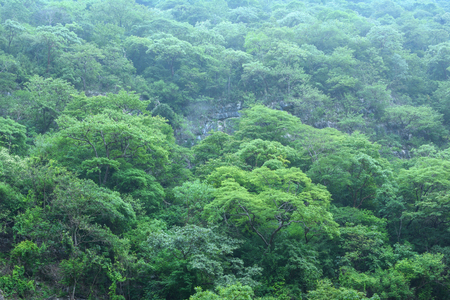 green environment: Deep green jungle landscape covering steep cliff in Chiapas, Mexico with light fog hovering above Stock Photo