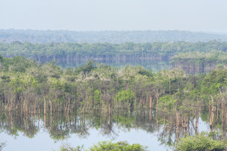 tributary: Midday haze over scenic flooded forest landscape of Urubu River tributary in the Amazon