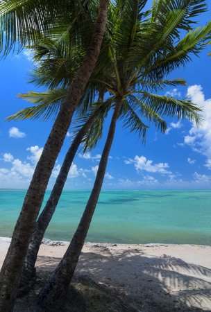 coconut trees: Beautiful sunny beach with three coconut palms and calm turquoise water in Brazils northeast coast Stock Photo