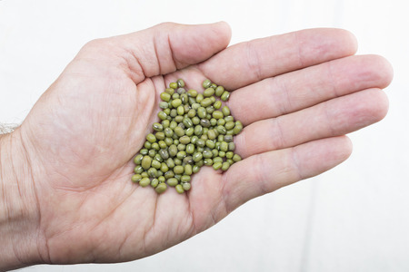 vigna: Closeup high angle shot of Caucasian hand holding whole raw Vigna radiata mung beans on white background