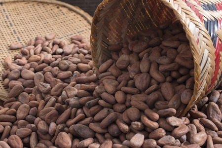 sifter: Closeup of pile of fresh raw Theobroma cacao cocoa beans from spilled native American woven basket and sifter Stock Photo