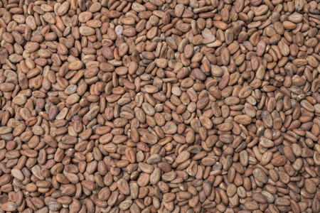 High angle background shot of raw Theobroma cacao beans filling entire image frame