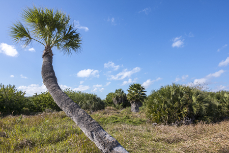 pinellas: Landscape scenic with thatch palms, trees and grasses on Tierra Verde island on gulf coast of Florida on sunny day