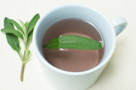 mellifera: Single leaf of Salvia mellifera black sage floats in cup of hot water with green sage branch along side Stock Photo