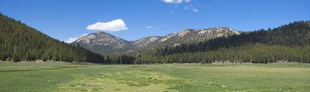 arbol de pino: Hermosa panorámica de la hierba verde prado rodeado de montañas boscosas de pino bajo el cielo azul en la meseta de Kern en California