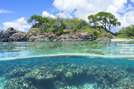 Fisheye sopra sotto rivelando vegetazione autoctona e corallo subacqueo scogliera a Tampico Beach sull'isola caraibica di Isla Culebra Archivio Fotografico