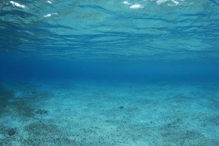 Płytkie dno morskie podwodne nieważne ryb lub życia rafy z ginących wgląd ciemnoniebieskie ciemności w Cozumel, Meksyk