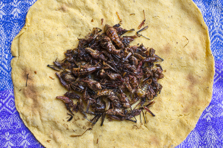 High angle view pile of roasted Oaxacan grasshoppers on traditional homemade corn tortilla