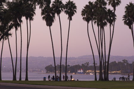 SAN DIEGO, CALIFORNIA, USA - OCTOBER 14, 2017: People enjoy a beautiful evening having a picnic on Mission Bay off of MIssion Bay Drive beneath tall fan palms.