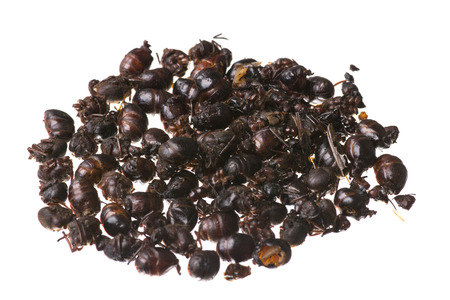 Closeup pile of roasted edible flying ants known as nucu in Chiapas, Mexico isolated on white