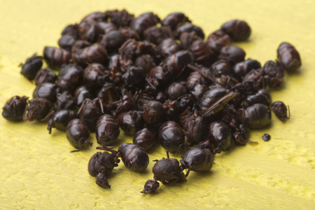 Pile of edible roasted flying ants on yellow table known as nucu in Chiapas, Mexico