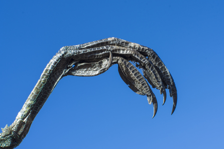 Closeup sharp talons of bird of prey isolated on blue sky background