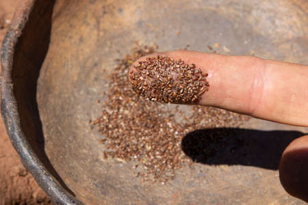 Macro closeup balck sage seed on man's finger with blurred background