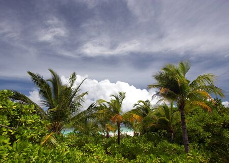 clowds: Low season in tropics. View of palm trees and sky with clowds before storm.