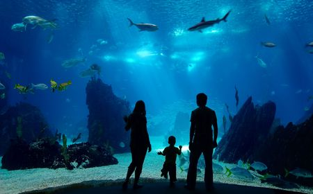 aquarium: Underwater family. Silhouettes of young family of three enjoying views of underwater life. Family having free time in Oceanarium.