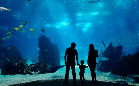 marine aquarium: Underwater family. Silhouettes of young family of three enjoying views of underwater life. Family having free time in Oceanarium.