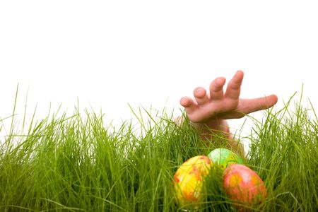 Easter egg hunt. Kids hand and easter eggs hidden in fresh green grass. Isolated on white background Stock Photo