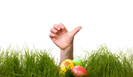 egg plant: Easter egg hunt. Kids hand and easter eggs hidden in fresh green grass. Isolated on white background Stock Photo