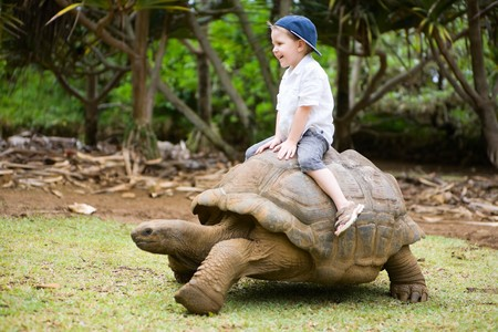 reptile: Fun activities in Mauritius. 4 years old boy riding giant turtle.