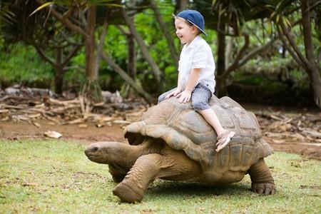 Leuke activiteiten op Mauritius. 4 jaar oude jongen rijden reusachtige schildpad. Stockfoto