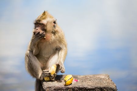 comiendo platano: Cute little mono salvaje comer banano