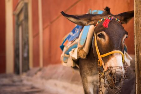 Traditional tourist attraction. Donkey of Santorini waiting for work photo