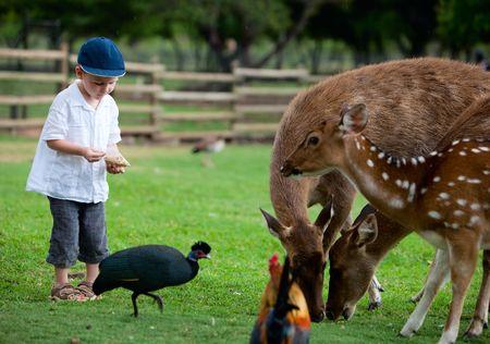 Little boy feeding deers in farm Stock Photo - 5371293