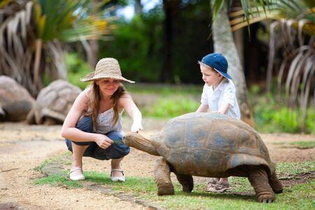 land turtle: Fun activities in Mauritius. Family feeding giant turtle. Stock Photo