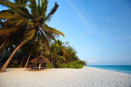 Morning colors of beautiful tropical beach of Zanzibar island, Tanzania photo