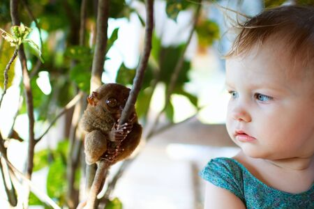 primate: Cute little girl looking at tarsier smallest primate