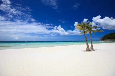 Perfect tropical white sand beach with palm trees photo