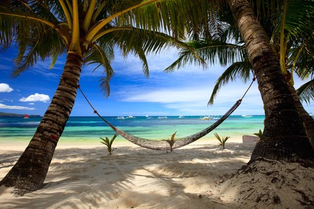 Perfect tropical beach with palm trees and hammock Stock Photo - 6982107