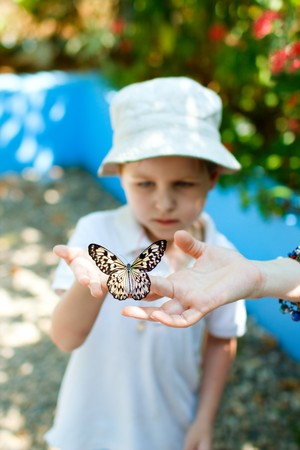 animal finger: Small boy holding beautiful butterfly on his fingers Stock Photo