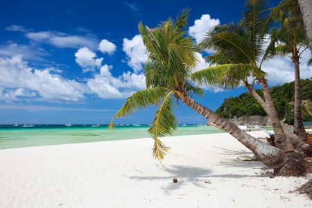 palmtree: Perfect tropical white sand beach in Boracay, Philippines